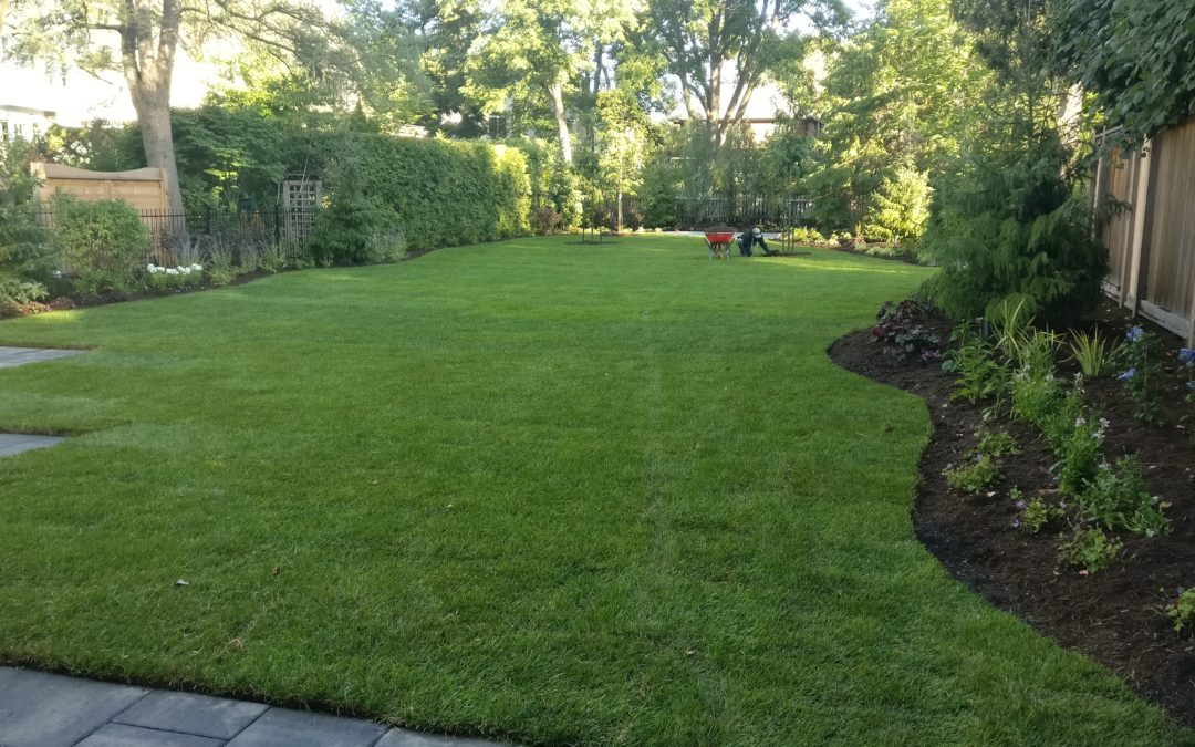 TORONTO LANDSCAPING TIPS FOR A HEALTHY LAWN