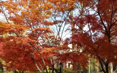 TORONTO LANDSCAPING: TOP 10 REASONS TO LOVE MAPLE TREES