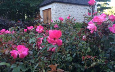 ROSE GARDENS FOR BEGINNERS