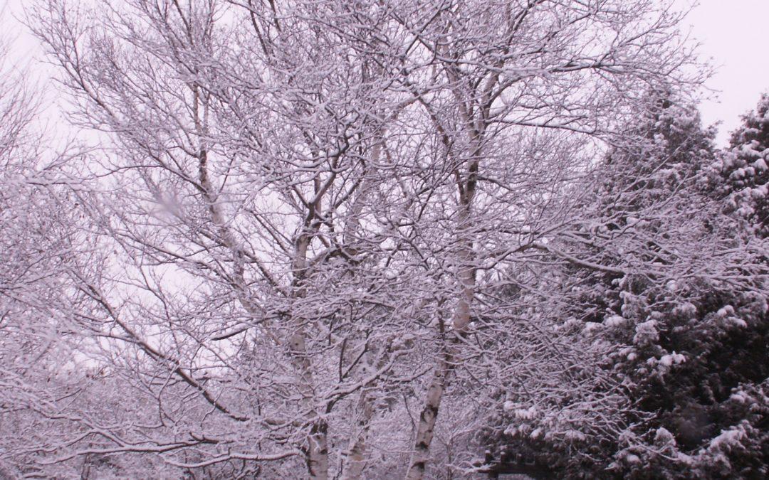 Winter wonderland??