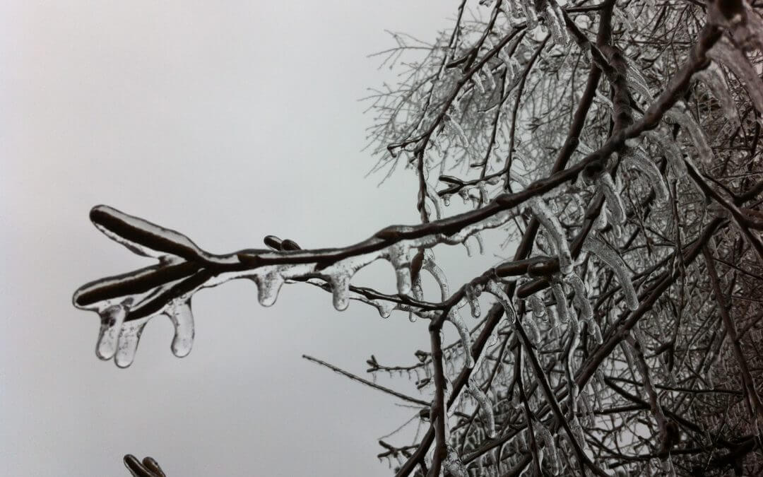 MOVING FORWARD FROM THE ICE STORM